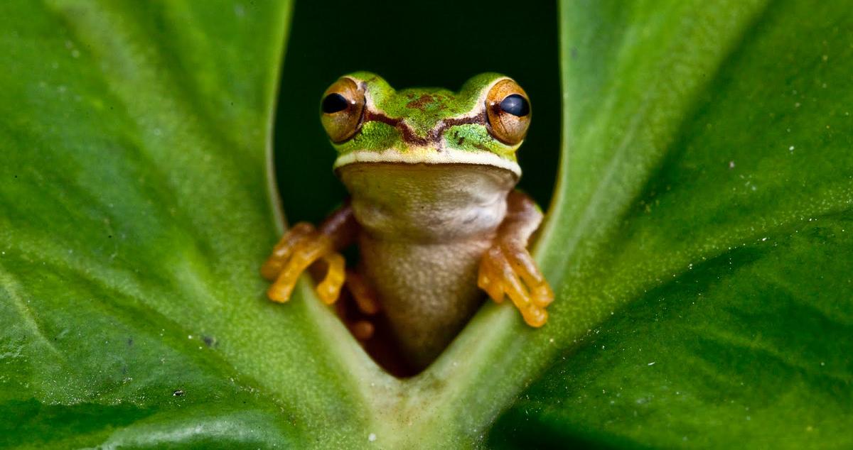 Время «съесть лягушку»_Тайм-менеджмент