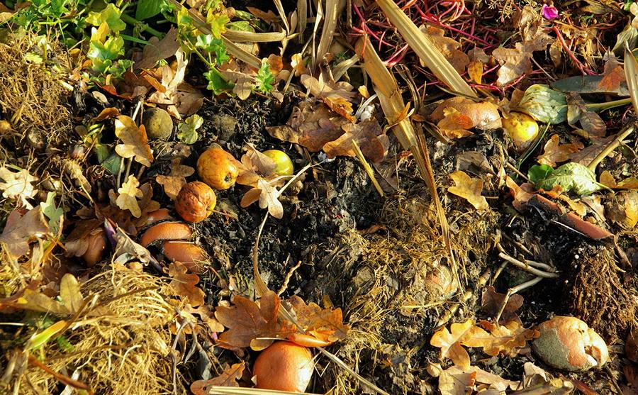 Органічні відходи