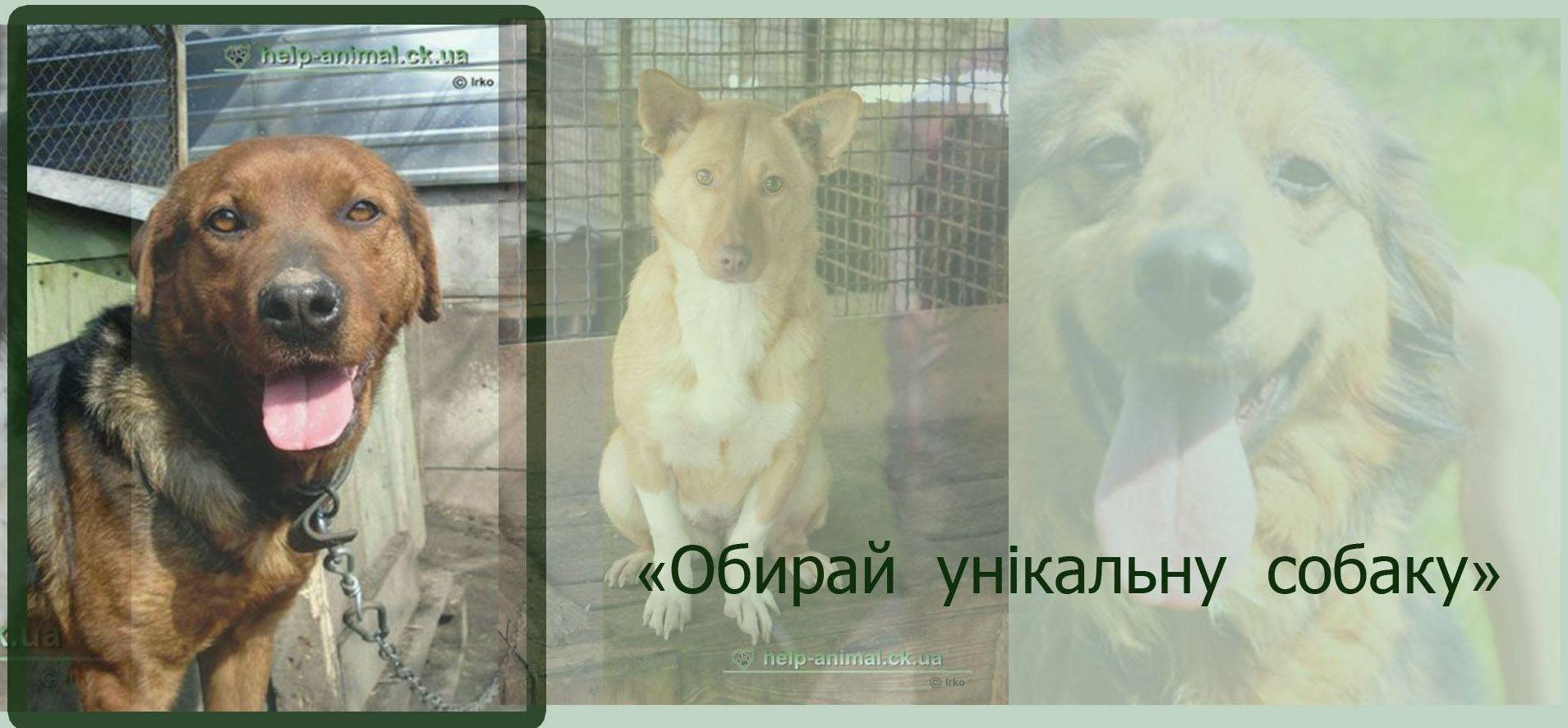"""Черкаське міське товариство захисту тварин """"Друг"""""""