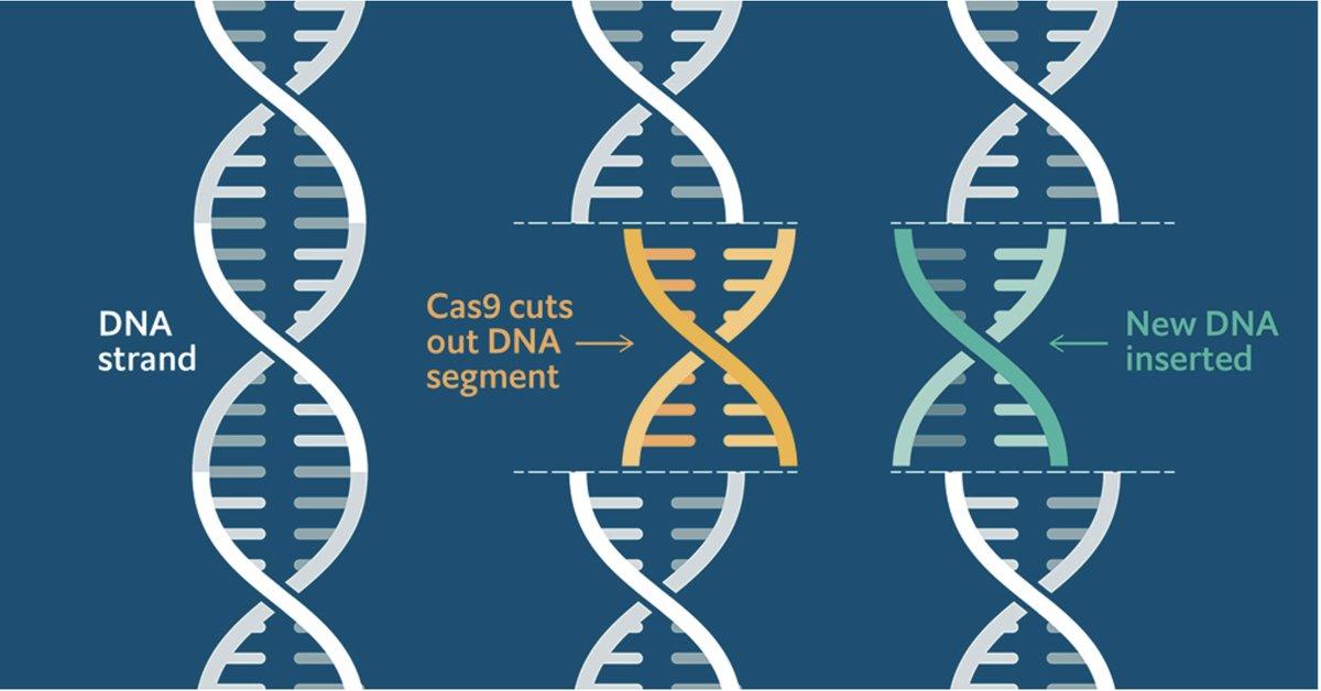 Редагування ДНК CRISPR/Cas9