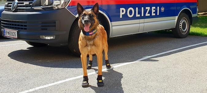 собака в обуви