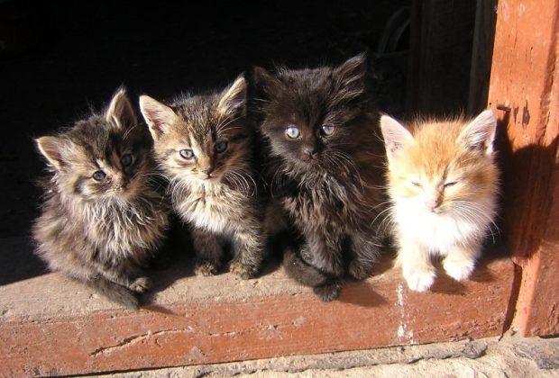 Картинки по запросу котята одесский живодер