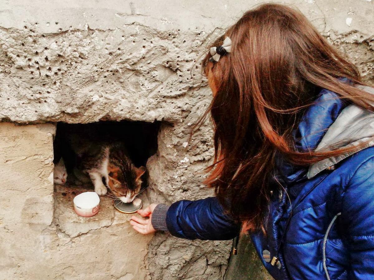 кормить бездомных животных