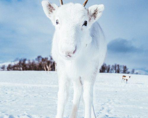 «Эта встреча предсказывает счастье»: в Норвегии сфотографировали редкое животное