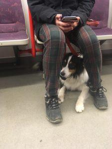 У празькому метро можна їздити з собаками