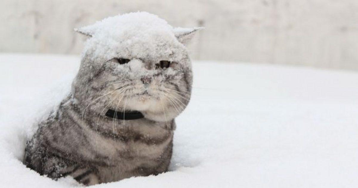 весь в снегу прикольные картинки это янт