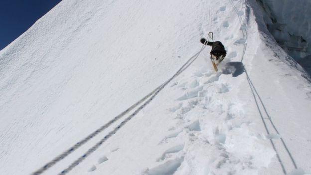 Бродячий пес підкорив гору