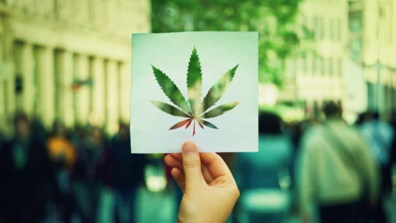 Перечень прекурсоров марихуаны как правильно пишется конопля