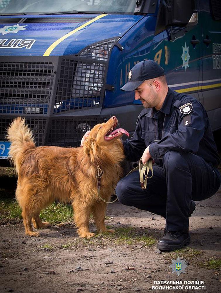 Українські патрульні влаштували фотосесію заради безпритульних собак