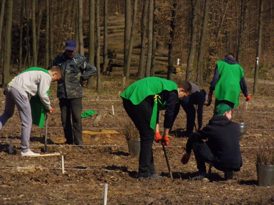"""Вінницькі школярі власноруч висадили """"експериментальний"""" ліс"""