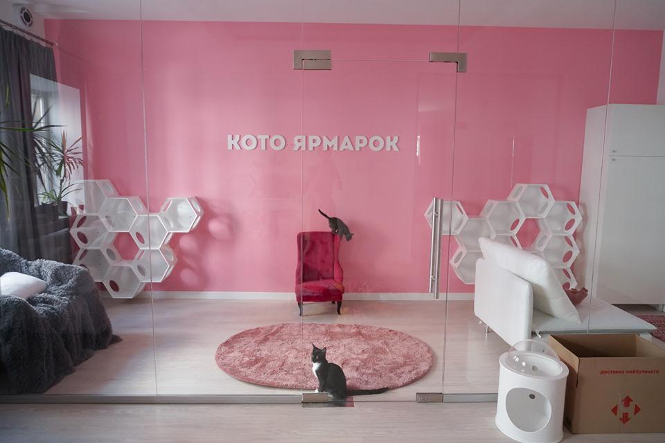 Центр кототерапії