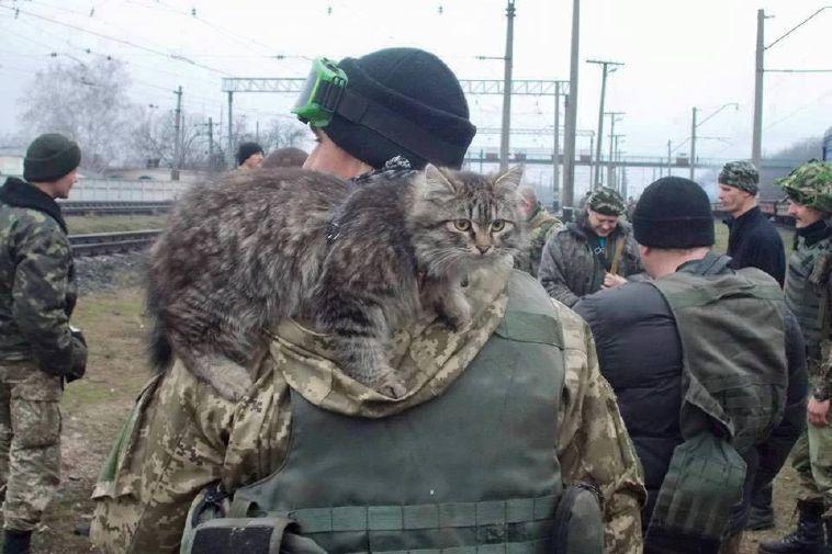 кот військові
