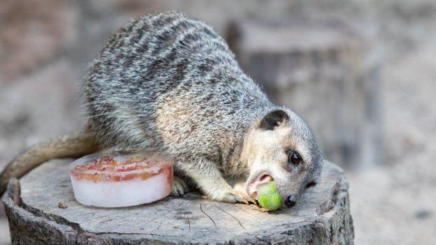 морозиво для тварин