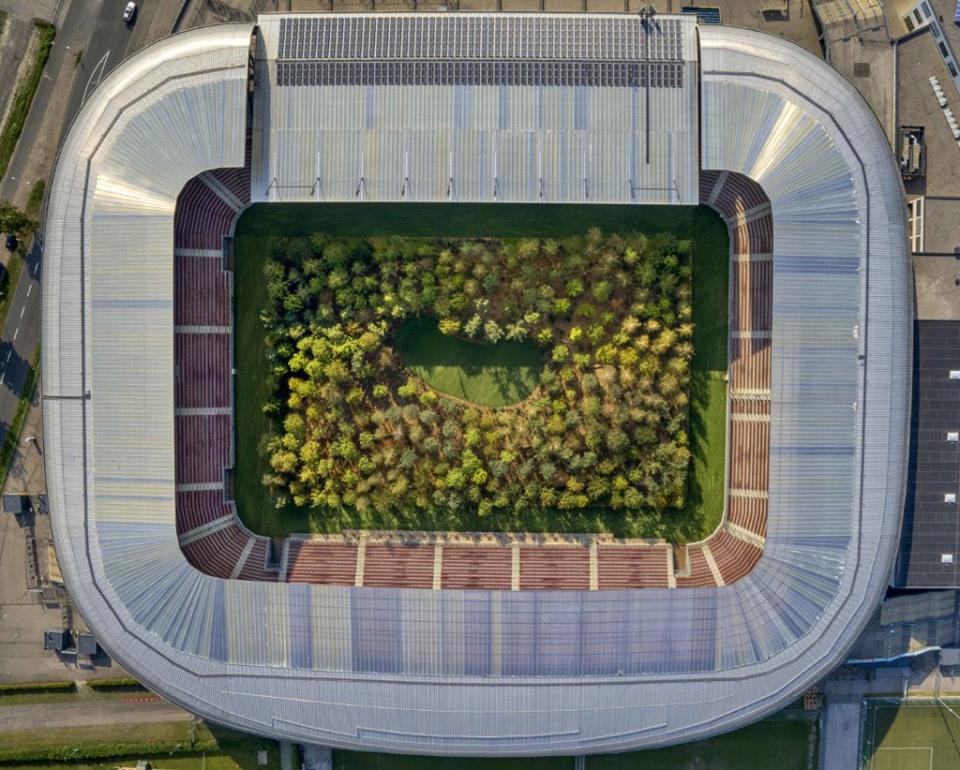 На футбольному стадіоні в Австрії висадили ліс
