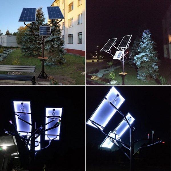 В Ровенской области на территории аграрного колледжа выросло «солнечное дерево»