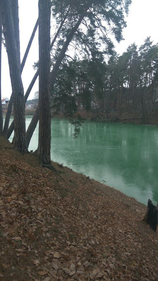 У селі під Києвом раптово позеленіло озеро