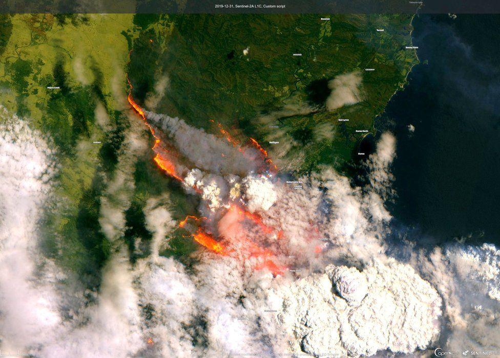 лісові пожежі австралія