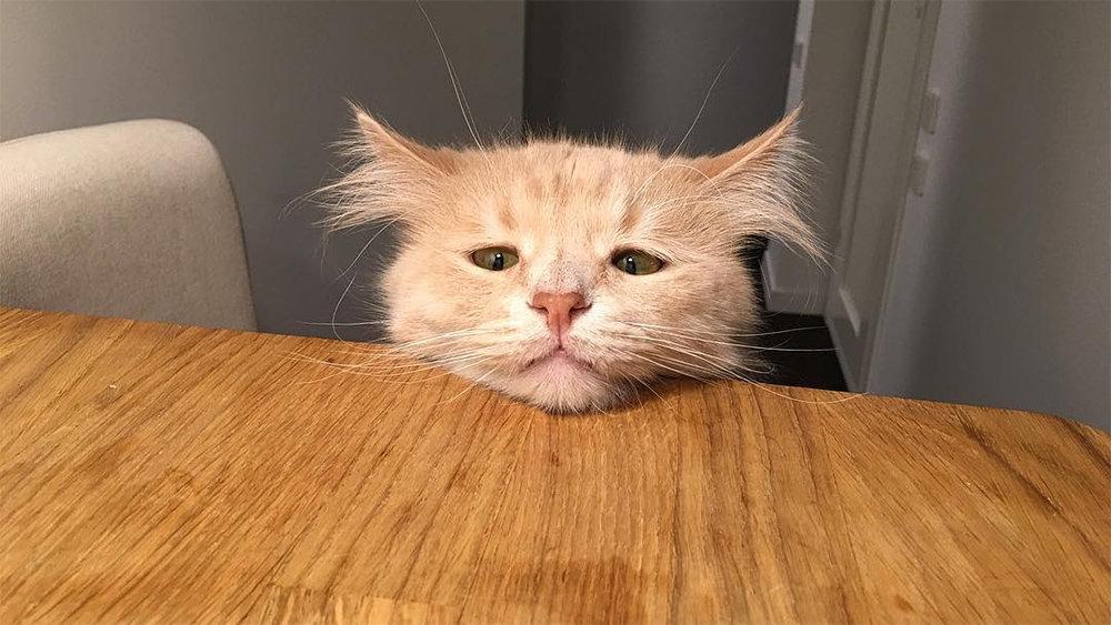 котик грустный