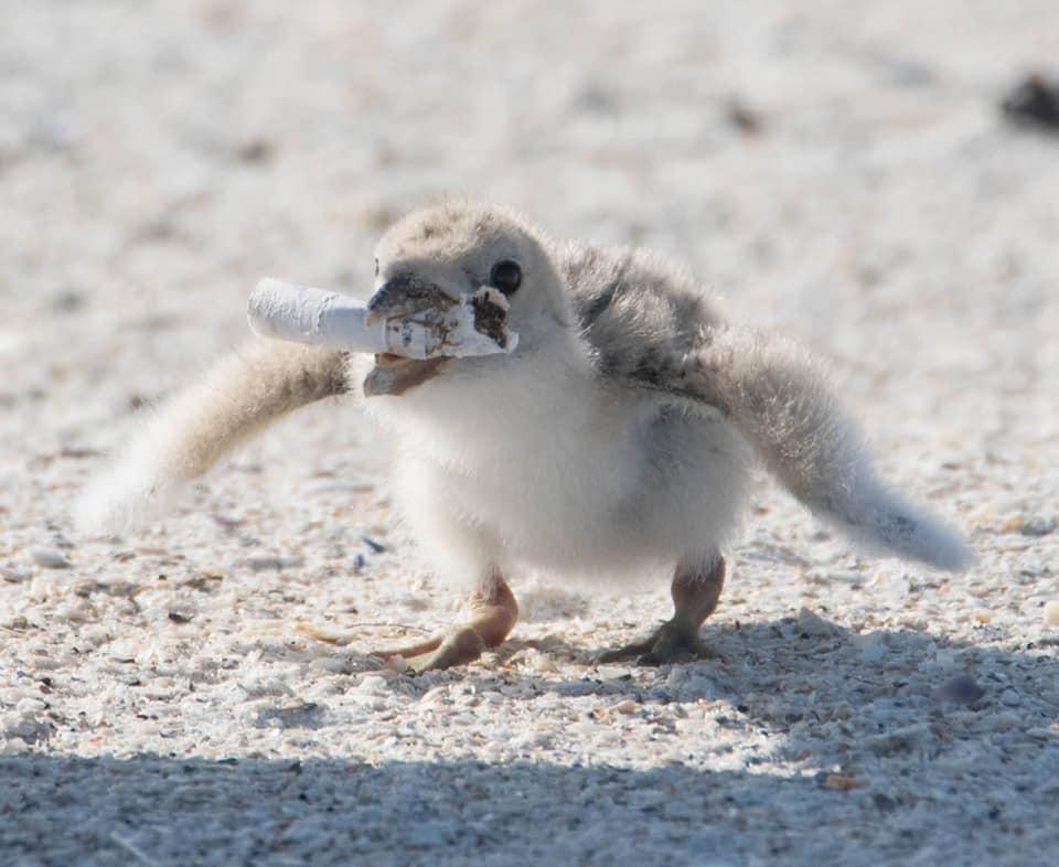 Пташка годує пташеня недопалком