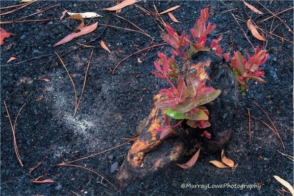 природа в Австралії оживає після пожеж