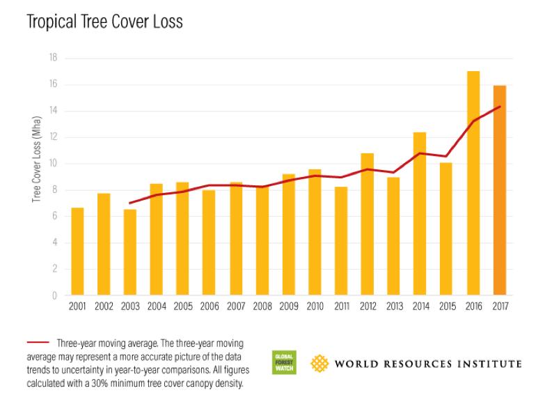 щохвилини у світі зникають тропічні ліси розміром у 30 футбольних полів