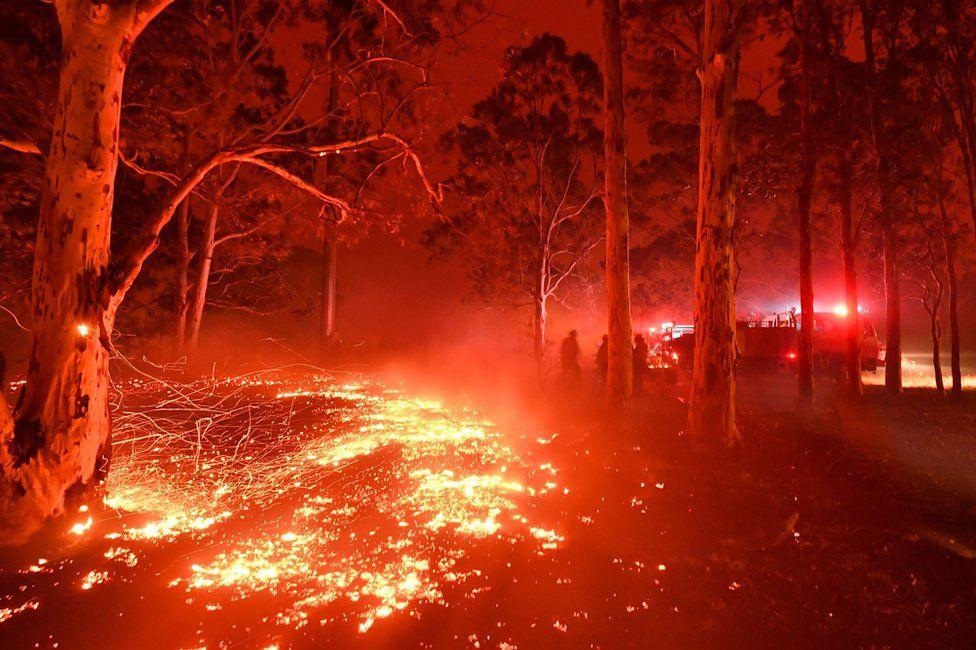 лесные пожары австралия