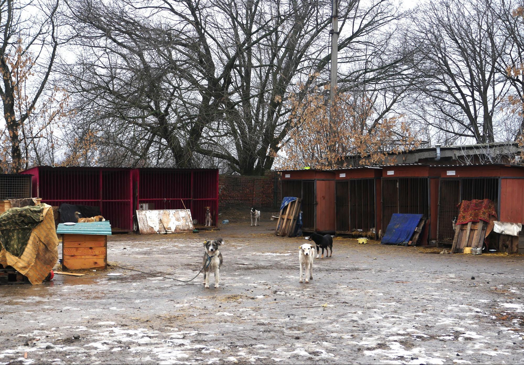 собаки славянск