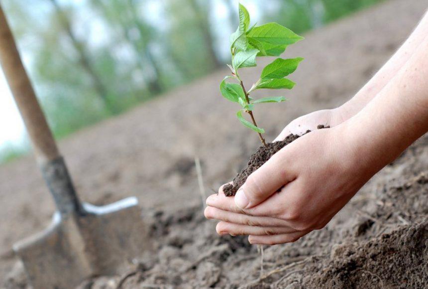 В Україні висадять мільйони дерев за день