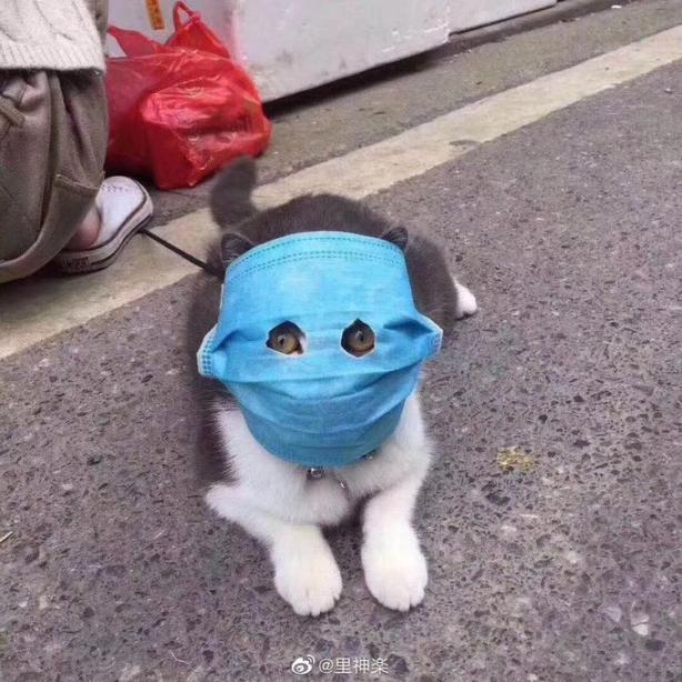 як китайці захищають домашніх улюбленців від коронавірусу