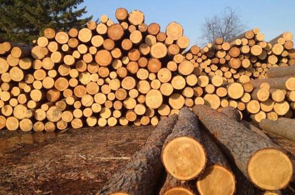 Україна та ЄС створили арбітражну групу для розгляду спору про заборону Україною експорту лісу-кругляку