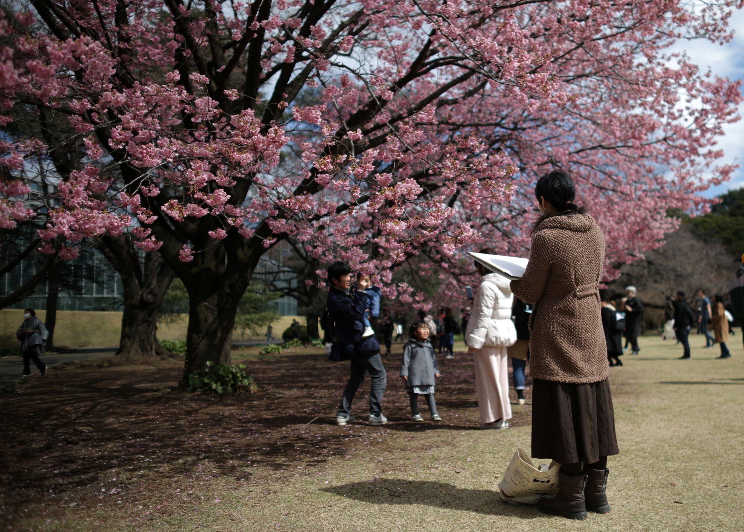У Токіо рекордно рано почався сезон цвітіння сакури