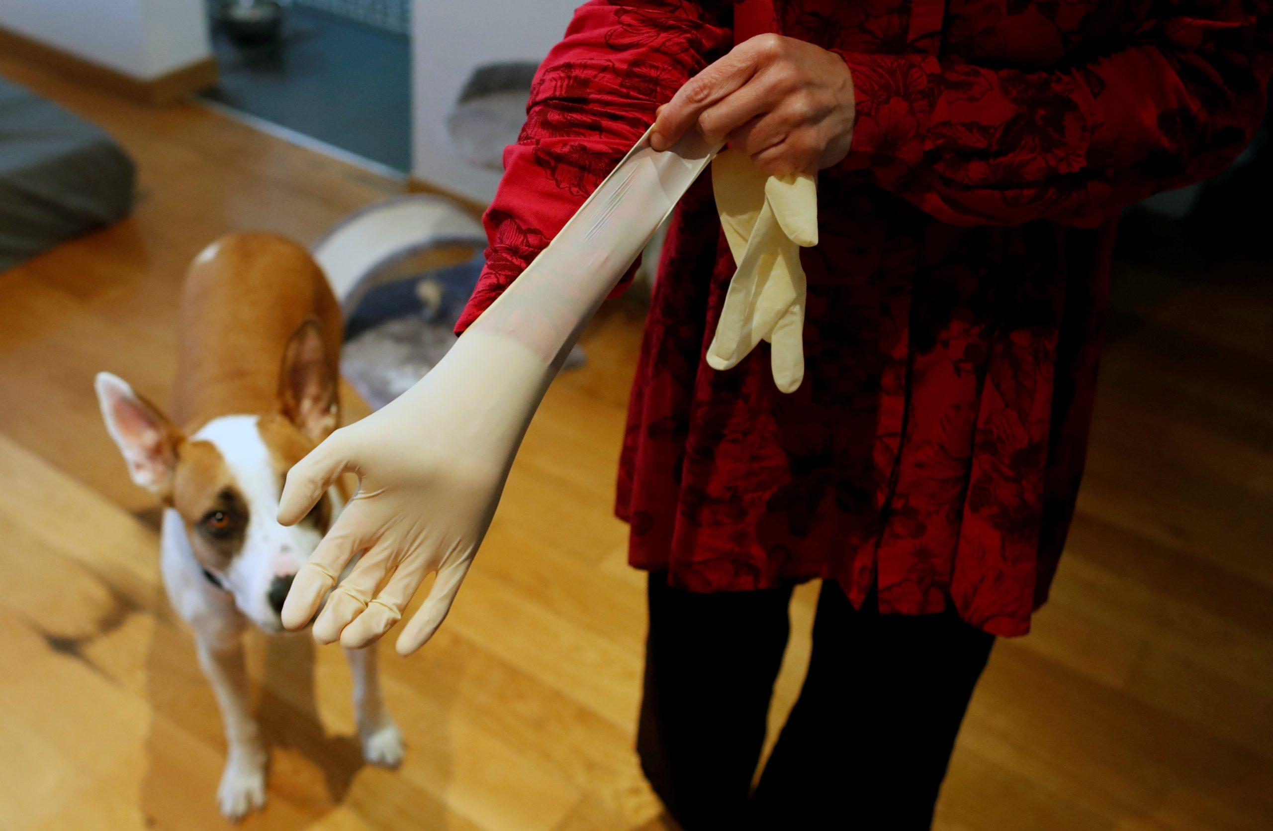 собака коронавірус