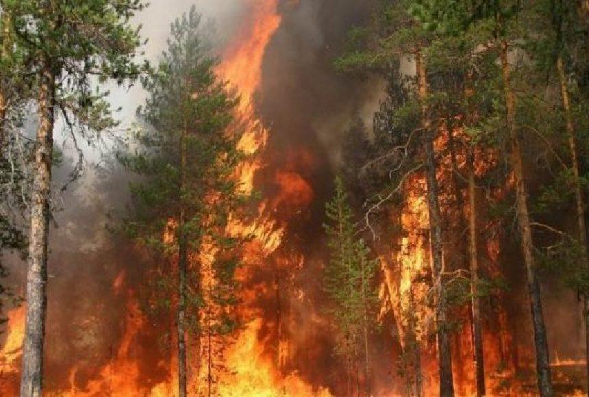 Лісові пожежі в Україні: чому гасити їх так складно і які ...