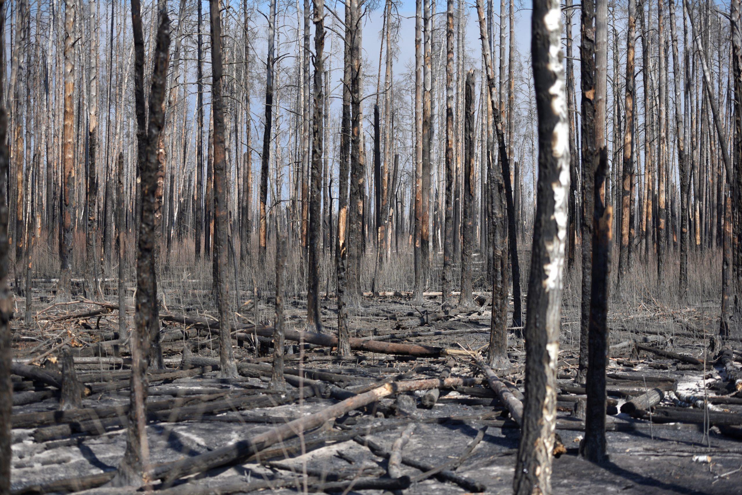 пожежі чорнобиль