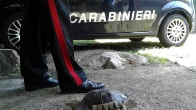 Італійку оштрафували за вигулювання черепахи