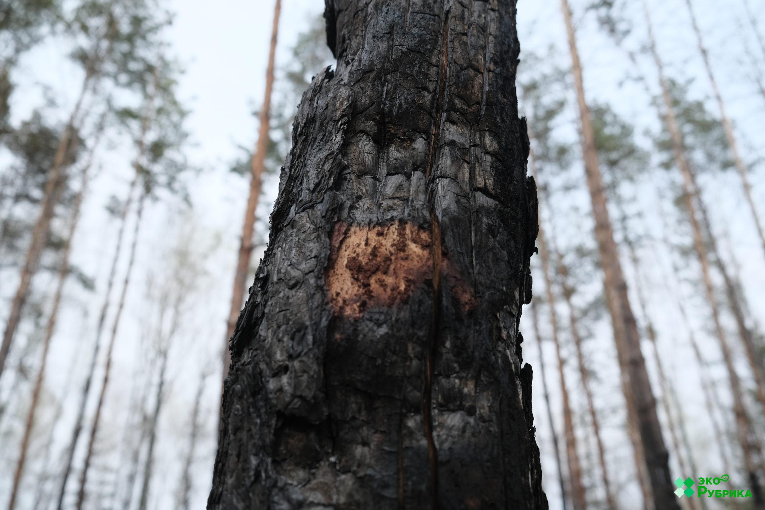 наслідки пожеж у чорнобилі