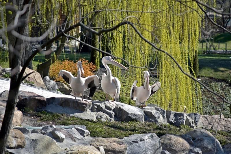 Київський зоопарк на карантині