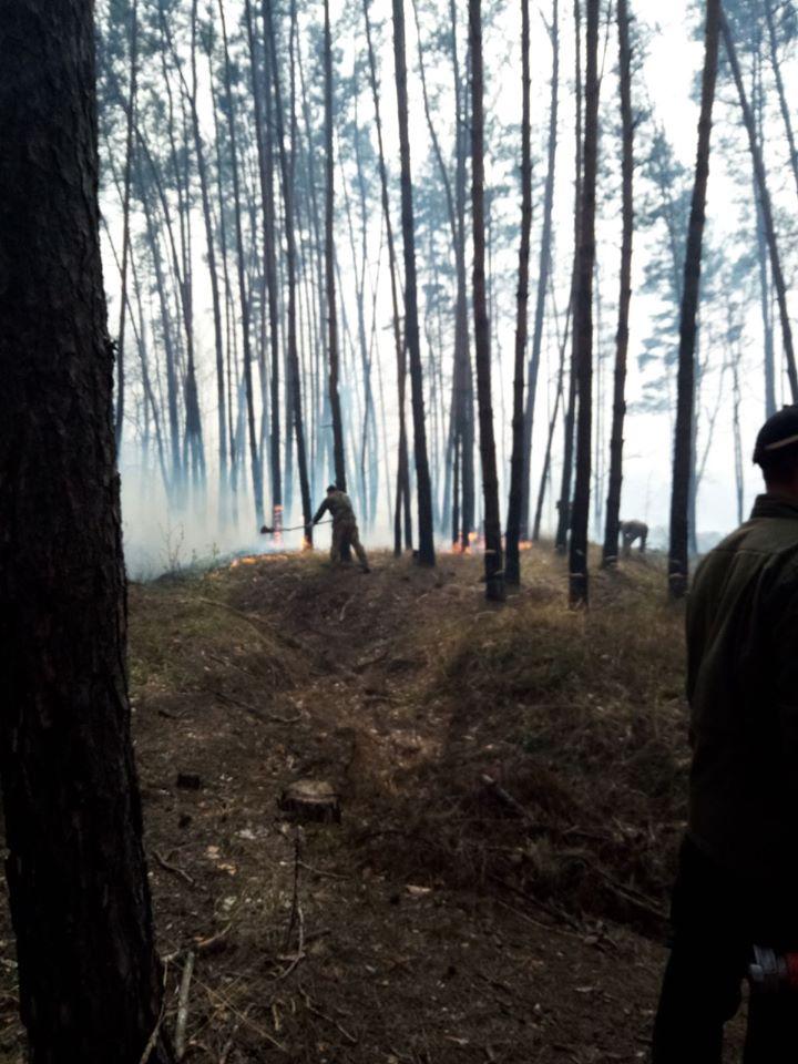 голосіївський ліс пожежа
