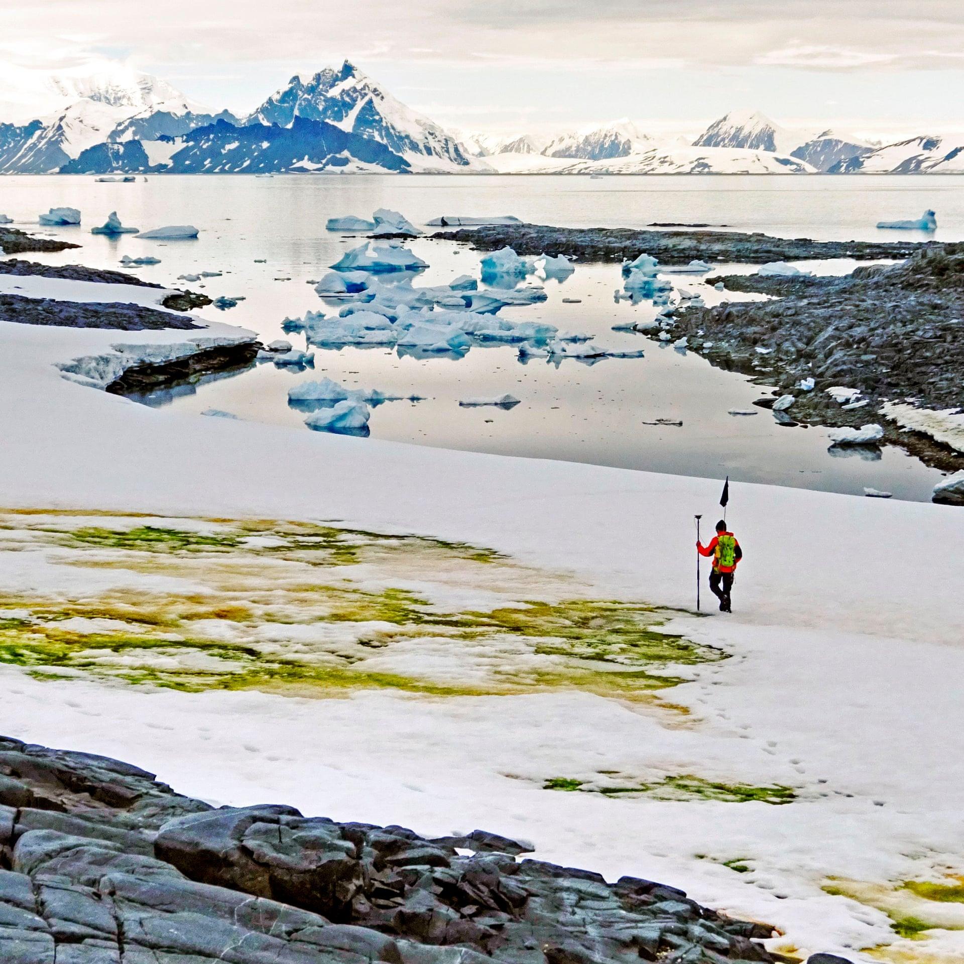 Антарктида зеленіє