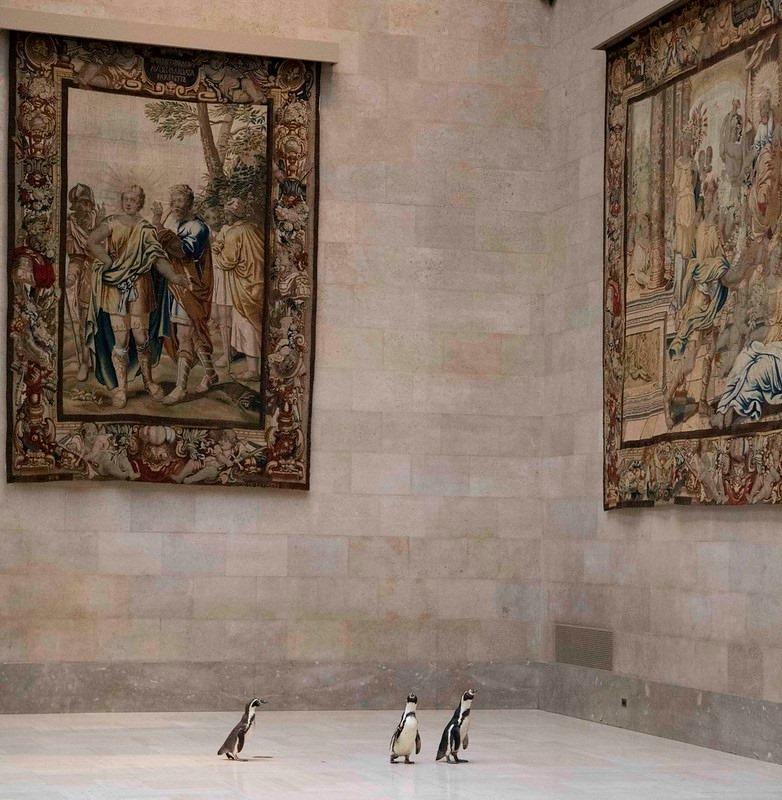 Пінгвінів із зоопарку Канзас-Сіті зводили у музей мистецтв