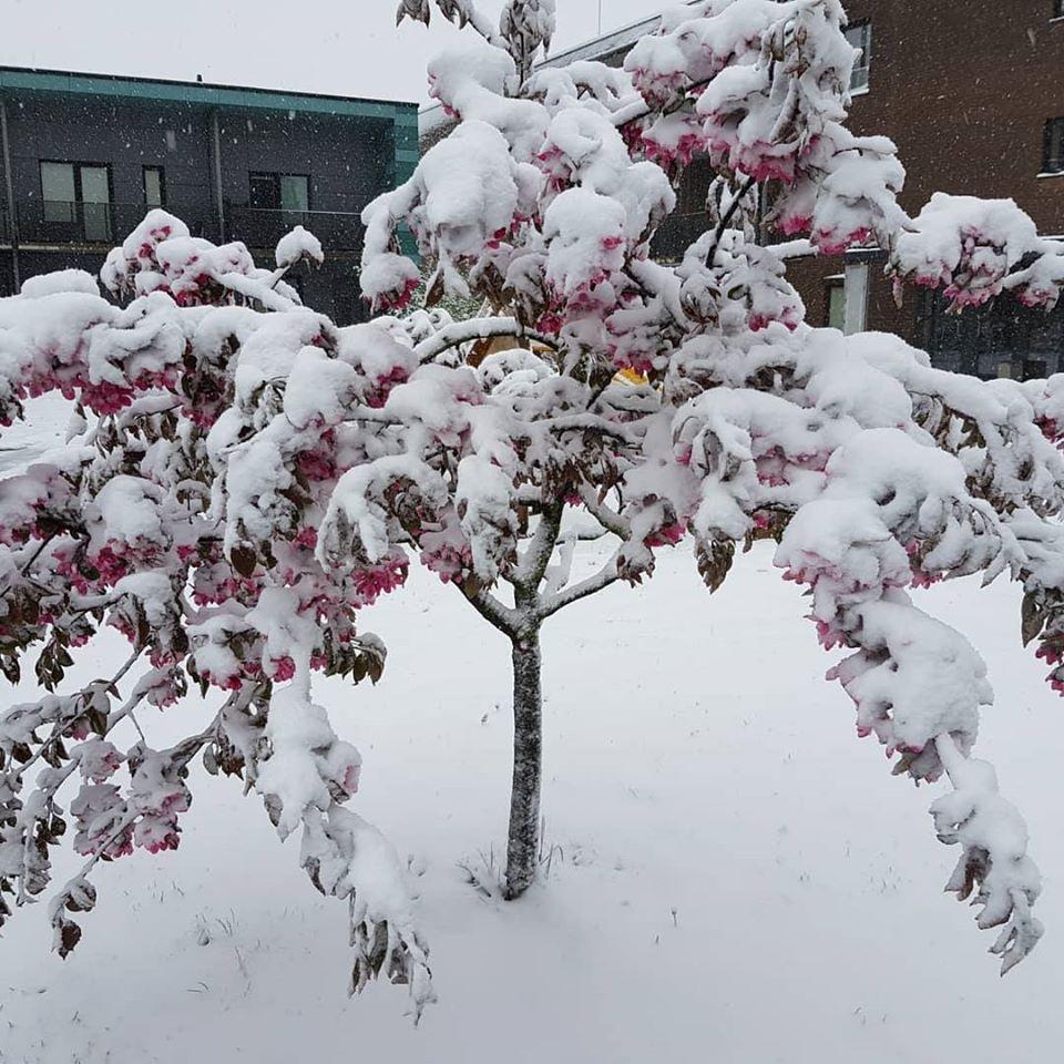 сніг травень