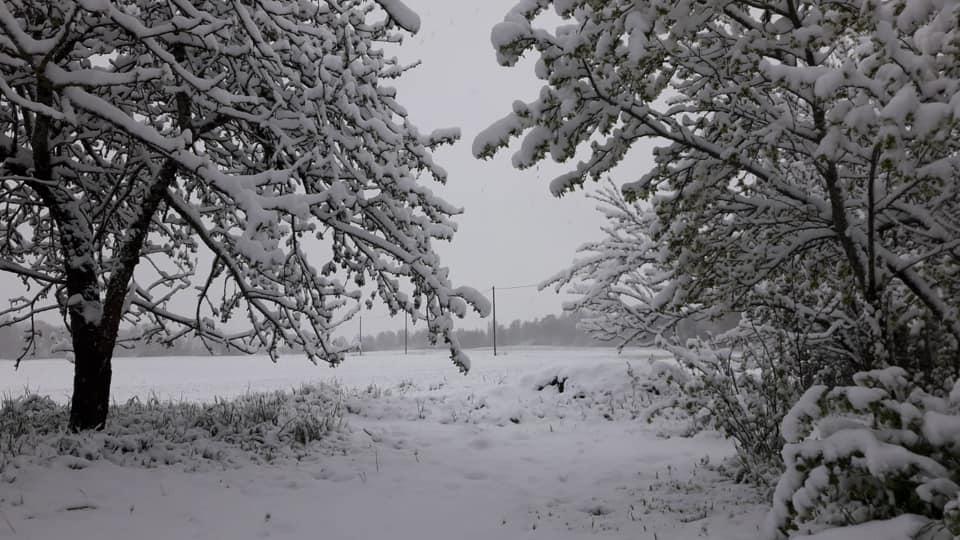 беларусь снег май