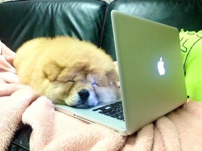 собаки работают дома