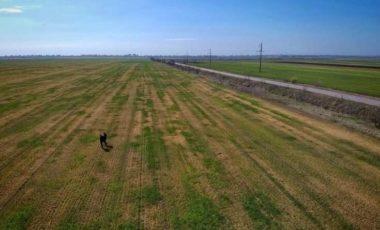Час пристосовуватися: як фермер з Одеської області виживає в період посухи та неврожаю