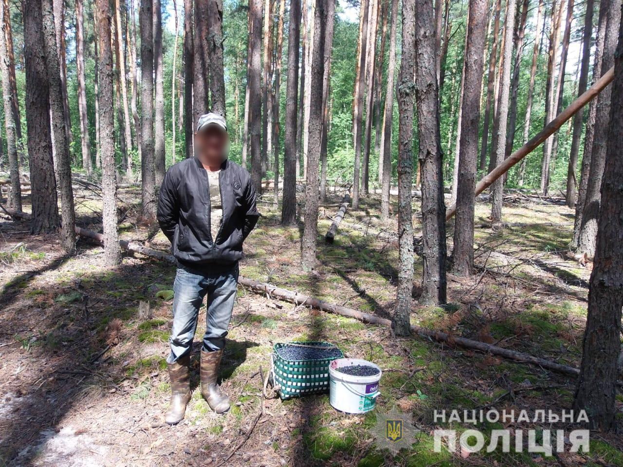 Із Чорнобильської зони намагалися вивезти 300 кг радіаційних ягід та 20 кг грибів