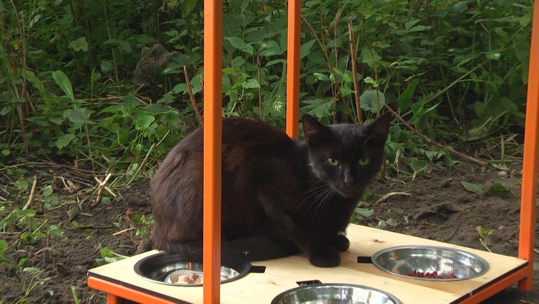 У Львові встановлюють годівнички для безпритульних котів