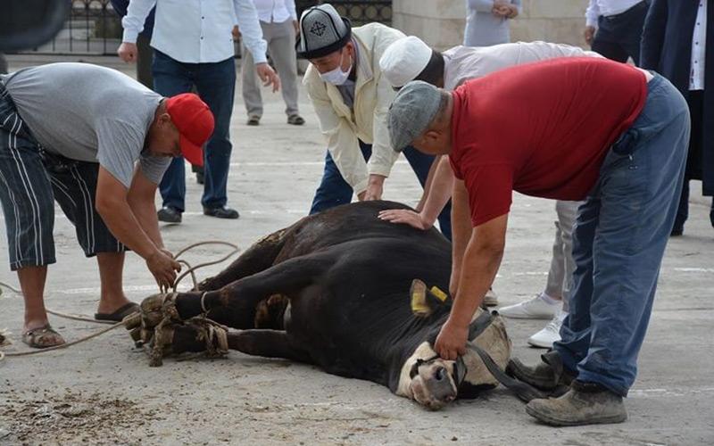 жертвоприношение киргизстан коронавирус