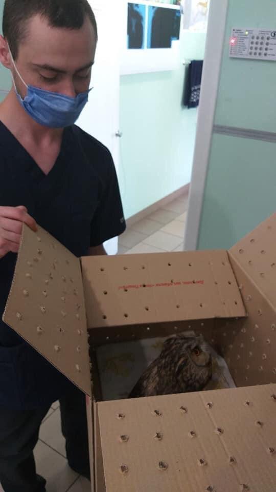 як врятувати птаха