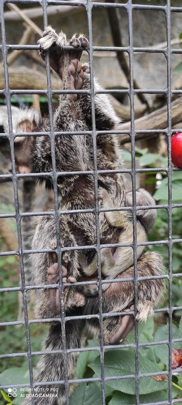 У Миколаївському зоопарку – бебі-бум: фото