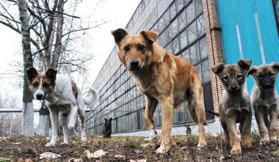 Проблема безпритульних тварин